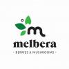 Melbera logotipo kūryba